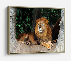 Lion resting on a tree HD Metal Print - Canvas Art Rocks - 8
