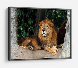Lion resting on a tree HD Metal Print - Canvas Art Rocks - 9