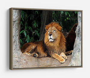 Lion resting on a tree HD Metal Print - Canvas Art Rocks - 10