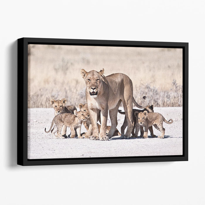 Lioness and cubs Floating Framed Canvas