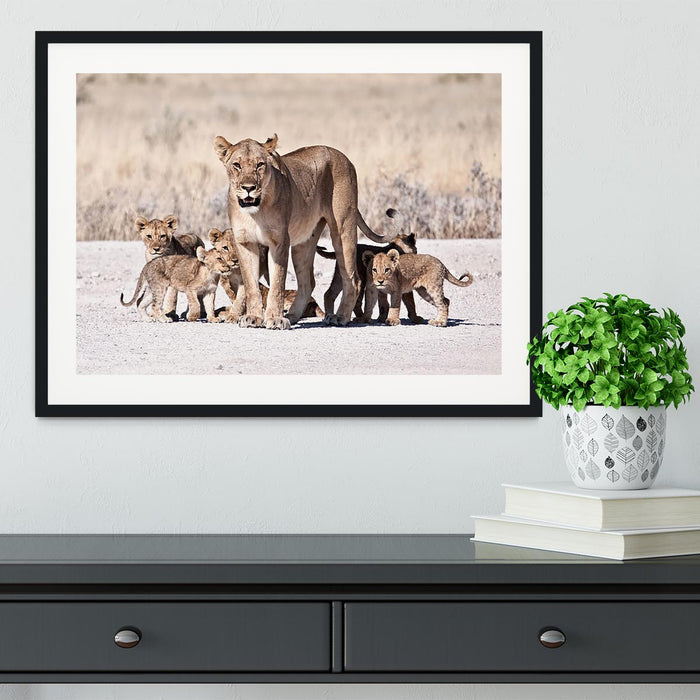 Lioness and cubs Framed Print