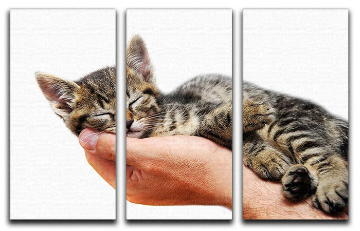 Little baby cat sleeping in male arms 3 Split Panel Canvas Print