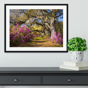 Live oak trees in morning sunlight Framed Print - Canvas Art Rocks - 1