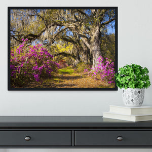 Live oak trees in morning sunlight Framed Print - Canvas Art Rocks - 2