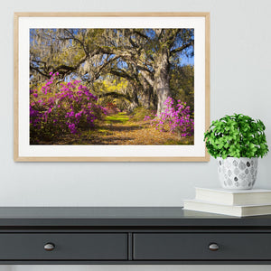Live oak trees in morning sunlight Framed Print - Canvas Art Rocks - 3