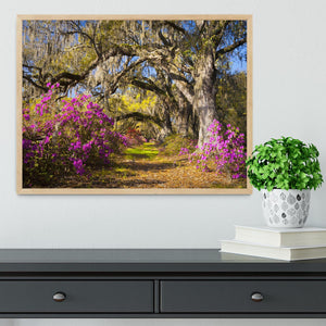 Live oak trees in morning sunlight Framed Print - Canvas Art Rocks - 4