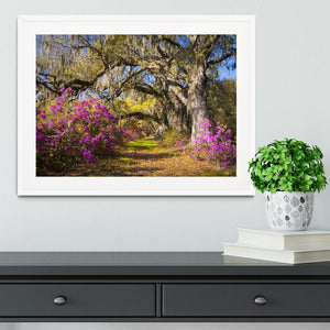 Live oak trees in morning sunlight Framed Print - Canvas Art Rocks - 5