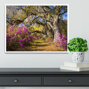 Live oak trees in morning sunlight Framed Print - Canvas Art Rocks -6