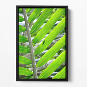 Morning in the forest Floating Framed Canvas