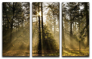 Morning sun in the forrest 3 Split Panel Canvas Print - Canvas Art Rocks - 1