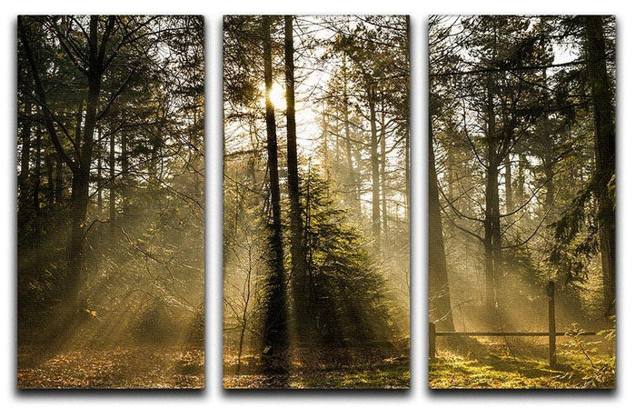 Morning sun in the forrest 3 Split Panel Canvas Print
