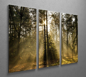 Morning sun in the forrest 3 Split Panel Canvas Print - Canvas Art Rocks - 2
