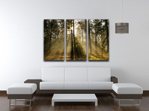 Morning sun in the forrest 3 Split Panel Canvas Print - Canvas Art Rocks - 3