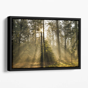 Morning sun in the forrest Floating Framed Canvas