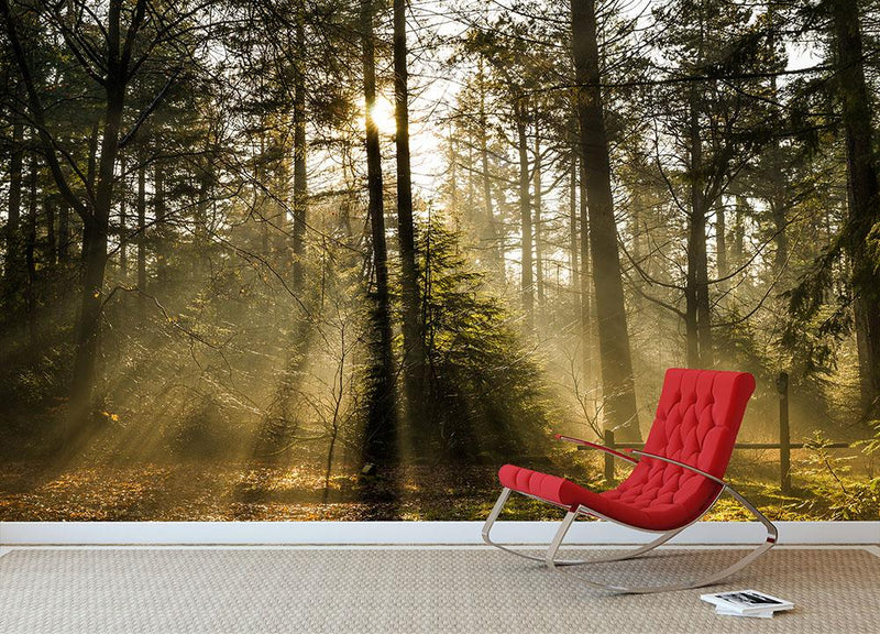 Morning sun in the forrest Wall Mural Wallpaper - Canvas Art Rocks - 1