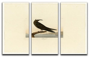 Noddy Tern by Audubon 3 Split Panel Canvas Print - Canvas Art Rocks - 1
