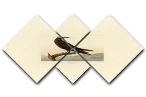 Noddy Tern by Audubon 4 Square Multi Panel Canvas - Canvas Art Rocks - 1