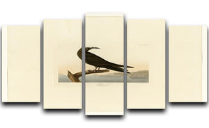 Noddy Tern by Audubon 5 Split Panel Canvas - Canvas Art Rocks - 1
