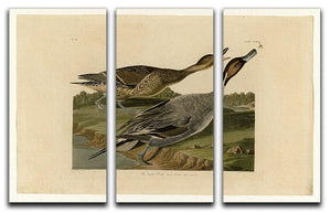 Pin tailed Duck by Audubon 3 Split Panel Canvas Print - Canvas Art Rocks - 1