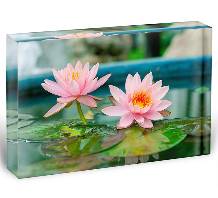 Pink Lotus or water lily in pond Acrylic Block
