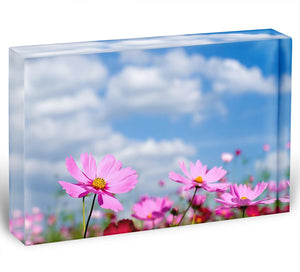 Pink cosmos field and sky Acrylic Block - Canvas Art Rocks - 1
