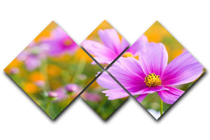 Pink cosmos in the flower fields 4 Square Multi Panel Canvas  - Canvas Art Rocks - 1