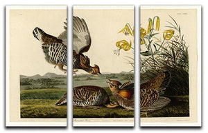 Pinnated Grouse by Audubon 3 Split Panel Canvas Print - Canvas Art Rocks - 1