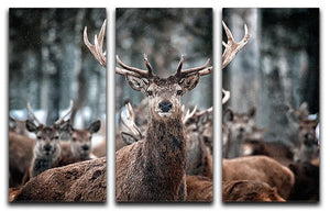 Red Deer Stag and Herd 3 Split Panel Canvas Print - Canvas Art Rocks - 1