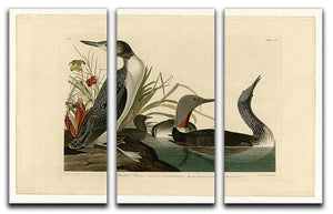 Red Throated Diver by Audubon 3 Split Panel Canvas Print - Canvas Art Rocks - 1