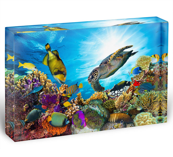 Reef with many fishes and sea turtle Acrylic Block