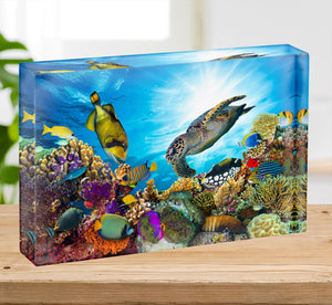 Reef with many fishes and sea turtle Acrylic Block - Canvas Art Rocks - 2