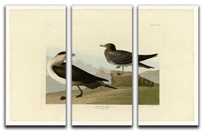 Richardsons Jager by Audubon 3 Split Panel Canvas Print - Canvas Art Rocks - 1