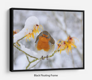 Robin in the Snow Floating Frame Canvas - Canvas Art Rocks - 1
