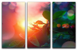 Rosebuds at sunset 3 Split Panel Canvas Print - Canvas Art Rocks - 1