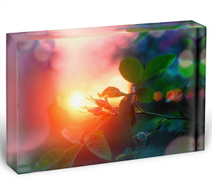 Rosebuds at sunset Acrylic Block - Canvas Art Rocks - 1