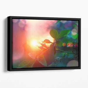 Rosebuds at sunset Floating Framed Canvas