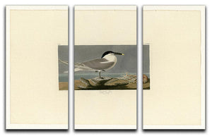 Sandwich Tern by Audubon 3 Split Panel Canvas Print - Canvas Art Rocks - 1