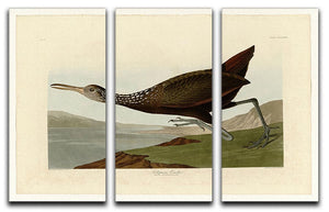Scolopaceus Courlan by Audubon 3 Split Panel Canvas Print - Canvas Art Rocks - 1