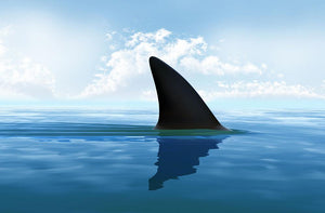Shark fin above water Wall Mural Wallpaper - Canvas Art Rocks - 1