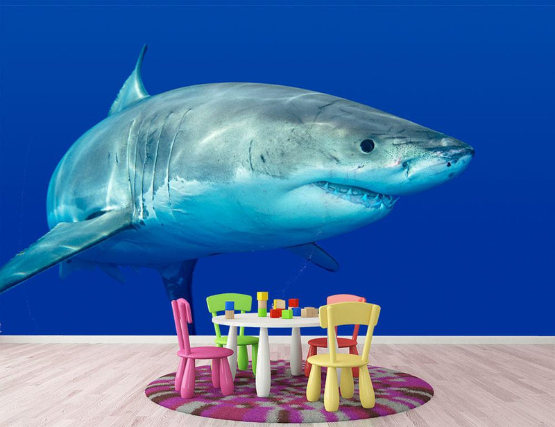 Shark swimming looking for food Wall Mural Wallpaper - Canvas Art Rocks - 1