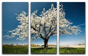Single blossoming tree in spring 3 Split Panel Canvas Print - Canvas Art Rocks - 1