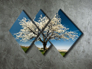 Single blossoming tree in spring 4 Square Multi Panel Canvas  - Canvas Art Rocks - 2