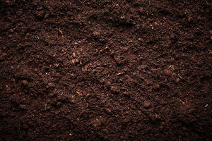 Soil texture Wall Mural Wallpaper - Canvas Art Rocks - 1