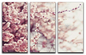 Spring Cherry blossoms 3 Split Panel Canvas Print - Canvas Art Rocks - 1