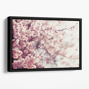 Spring Cherry blossoms Floating Framed Canvas