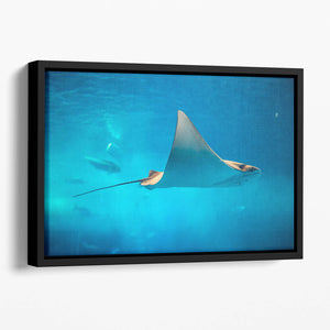 Stingray in the aquarium Floating Framed Canvas