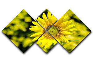 Sunflowers bloom in summer 4 Square Multi Panel Canvas  - Canvas Art Rocks - 1
