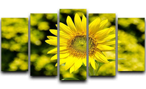 Sunflowers bloom in summer 5 Split Panel Canvas  - Canvas Art Rocks - 1
