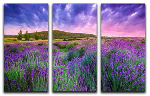 Sunset over a summer lavender field 3 Split Panel Canvas Print - Canvas Art Rocks - 1