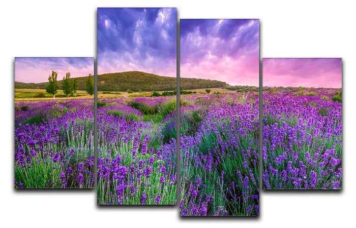 Sunset over a summer lavender field 4 Split Panel Canvas
